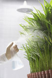 Scientist Spraying Plants Royalty Free Stock Photography