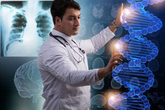 The scientist studying human dna in lab Royalty Free Stock Image