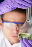 Scientist Studying Liquid In Flask Stock Images