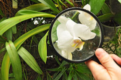 Scientist studying orchid plant Stock Photography