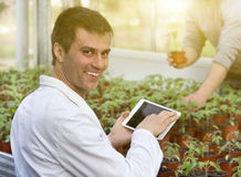 Scientist with tablet and sprouts in green house Royalty Free Stock Images
