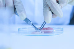 The scientist test or science research,science concept,science e Stock Image