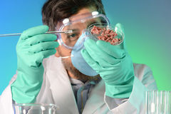 Scientist Testing Meat Stock Photos