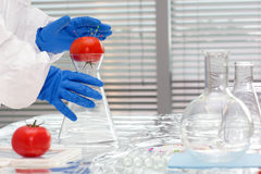 Scientist with tomatoes in lab - close up Stock Image