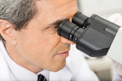 Scientist Using Microscope In Lab. Closeup of mature male scientist using microscope in laboratory Royalty Free Stock Photo