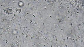 Scientist using microscope. stock video