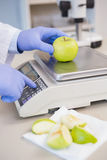 Scientist weighing apple Royalty Free Stock Photo