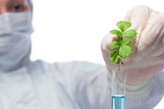 Scientist in a white mask and protective suit, conducting an experiment with the plant in a flask. On white Royalty Free Stock Image