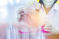 Scientist woman dropping pink chemical liquid with test tube glass for carrying research chemistry liquid Royalty Free Stock Photography