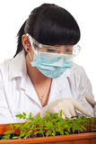 Scientist woman examine new tomatoes leafs Royalty Free Stock Images