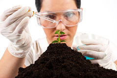 Scientist woman  working. Close up of  agricultural scientist pouring  liquid on a plant  working in laboratory,selective focus on plant,check also my collection Royalty Free Stock Images