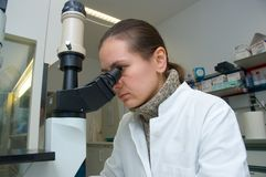 Scientist at work. A scientist woman works with microscope in the laboratory Stock Photos