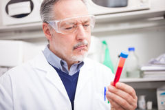 Scientist at work in a laboratory Royalty Free Stock Image