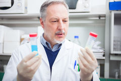 Scientist at work in a laboratory Royalty Free Stock Images