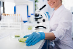 Scientist during work with microscope at modern biological laboratory. Female scientist during work with microscope at modern biological laboratory Royalty Free Stock Photos
