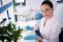 Scientist during work at modern biological laboratory. Female scientist during work at modern biological laboratory Royalty Free Stock Photo