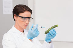 Scientist working attentively with courgette Royalty Free Stock Image