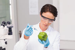 Scientist working attentively with green pepper Stock Photos