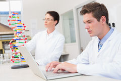 Scientist working attentively with laptop and another with dna model Stock Image