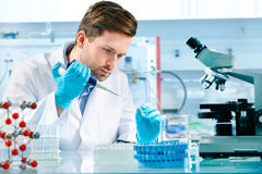 Scientist working Stock Photos