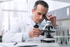 Scientist working with microscope. Focused male scientist in white coat doing a microscope sample analysis in chemical lab Royalty Free Stock Photos