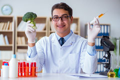 The scientist working on organic fruits and vegetables Stock Photography