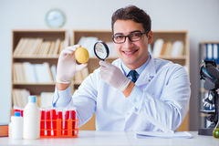 The scientist working on organic fruits and vegetables Stock Image
