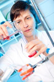 Scientist works in a chemical lab Stock Images