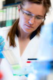 Scientist works in modern laboratory Royalty Free Stock Photo