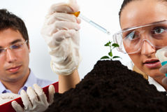 Scientists agricultural people. Two scientists agricultural people working in laboratory,selective focus on woman face,check also my collection Scientists people Royalty Free Stock Photos