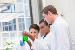 Scientists analyzing beakers with chemical fluid Royalty Free Stock Image