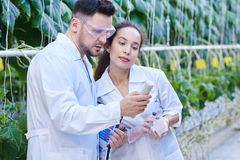 Scientists Checking Quality of Vegetables in Plantation. Waist up portrait of two modern scientists checking quality of production taking probes in greenhouse of Stock Image