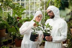 Scientists in clean suit examining potted plants. Male and female scientists in clean suit examining potted plants at greenhouse Royalty Free Stock Photo