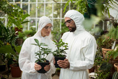 Scientists in clean suit holding potted plants. Male and female scientists in clean suit holding potted plants at greenhouse Stock Photography