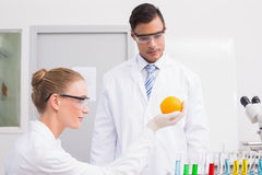 Scientists doing experimentations on orange Stock Image