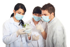 Scientists examine new plants in soil Stock Image