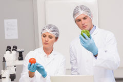 Scientists examining attentively green pepper and tomato Royalty Free Stock Images