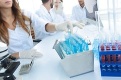 Scientists examining in the lab with test tubes. Stock Photos