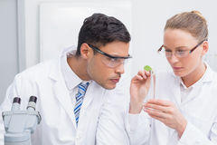 Scientists examining a leaf Stock Photography