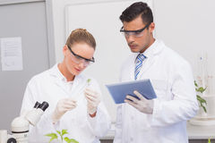 Scientists examining leaf of plants Stock Photos