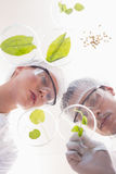 Scientists examining leafs in petri dish Stock Photography