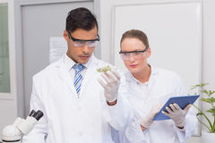Scientists holding a petri dish with tests of plants Royalty Free Stock Photos