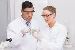 Scientists holding a petri dish with tests of plants Royalty Free Stock Image