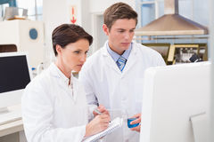 Scientists looking attentively at computer. In laboratory royalty free stock image