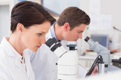 Scientists looking attentively in microscopes Stock Photos