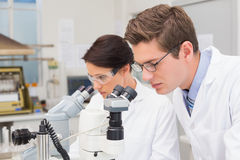 Scientists looking attentively in microscopes Stock Photography