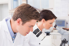 Scientists looking attentively in microscopes Royalty Free Stock Image