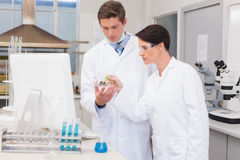 Scientists looking attentively at petri dish Stock Photos