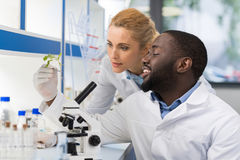 Scientists Looking At Sample Of Plant Working In Genetics Laboratory, Mix Race Couple Of Researchers Analyzing Result Of. Experiment In Lab Stock Image