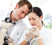 Scientists looking at a slide under a microscope. Young scientists looking at a slide under a microscope stock image